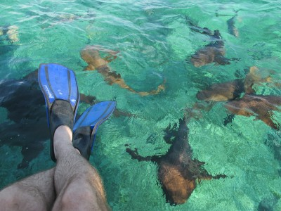 Snorkeling with Sharks at Shark Ray Alley Belize