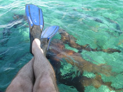 Snorkeling in Shark Ray Alley Belize