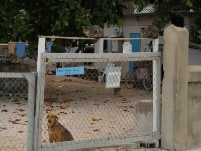 Caye Caulker Animal Shelter