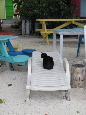 Cat on Lounge Chair in Belize